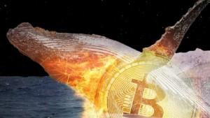 Ảnh của Cá voi Bitcoin liên tục gom 170.000 BTC chỉ trong 6 tuần qua trong khi có dòng chảy khổng lồ ra khỏi Binance