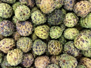 Picture of China halts Taiwan sugar apple, wax apple imports to prevent disease