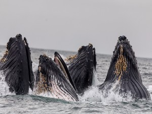 Ảnh của Cá voi Bitcoin, ETH rủ nhau đánh tháo khỏi Huobi và chuyển tiền theo cách kỳ lạ