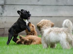 Ảnh của Các em nhỏ SHIB, ELON, SMI có thể pump giá người anh cả DOGE không?